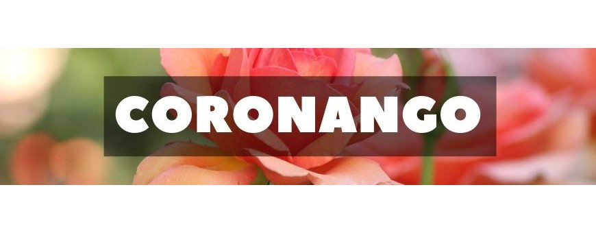 Delivery of flowers and gifts in Coronango. Florists in Coronango