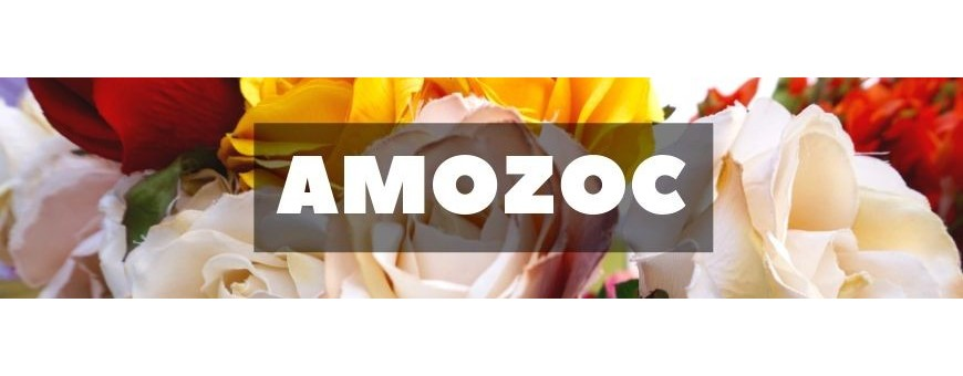 Delivery of flowers and gifts in Amozoc. Florists in Amozoc
