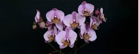 Send Plants and Orchids to Puebla, local delivery for today