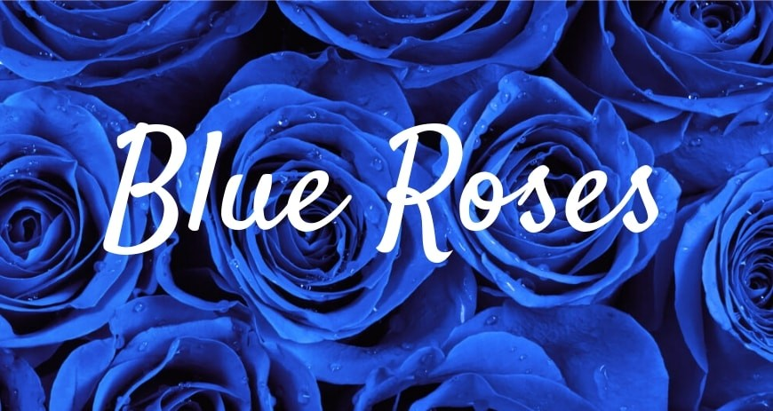 Blue roses - history and meaning