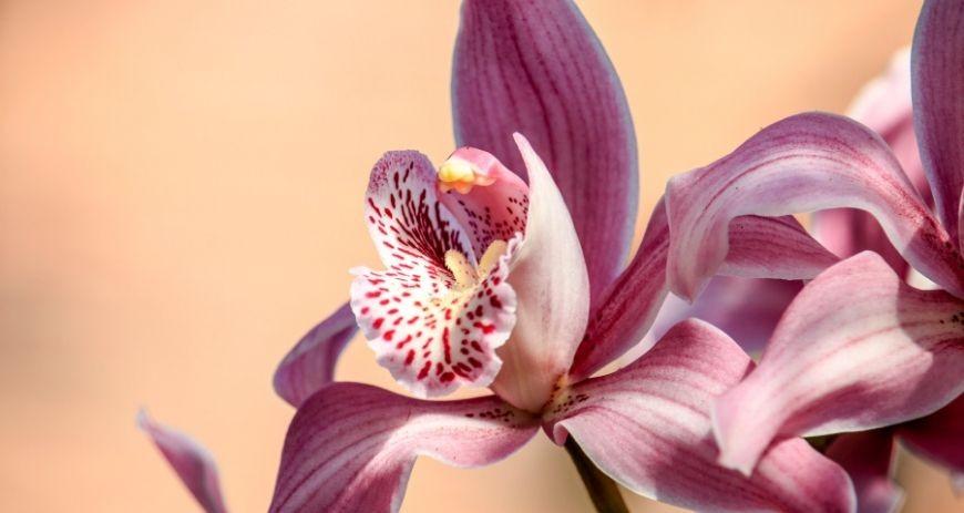 La importancia de conocer la especie de la orquídea