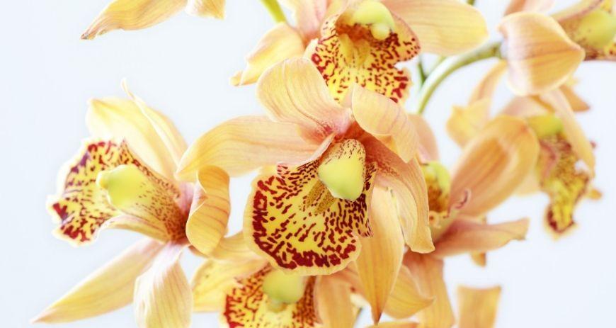 Temperatura y humedad para cuidar las orquídeas