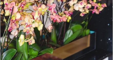 Abono para las orquídeas