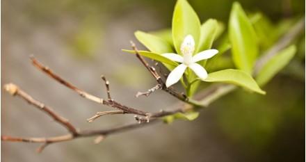 Floración y poda de las orquídeas